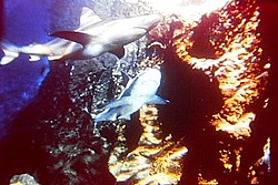[Boîte à photos] Marineland P6190017
