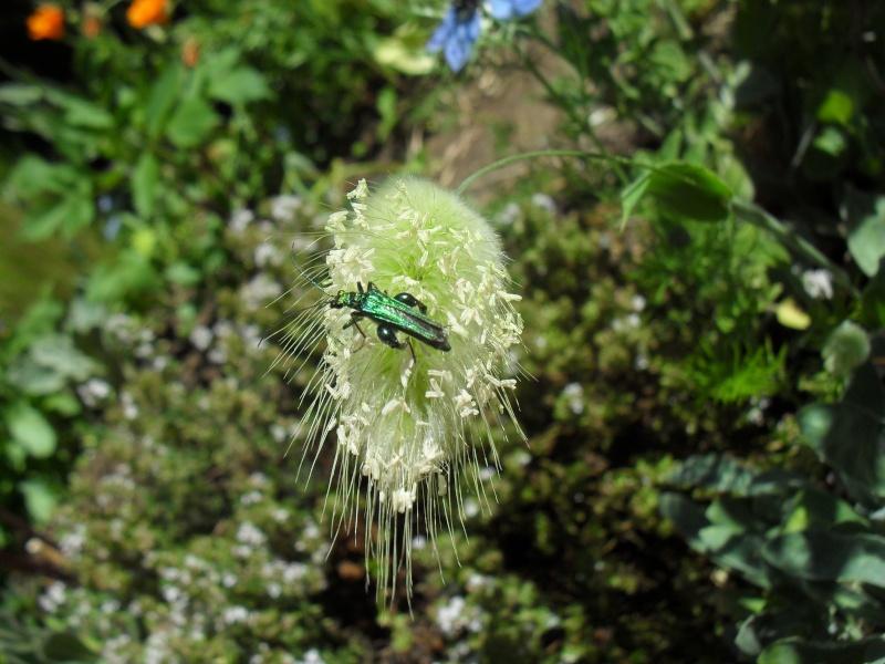 insecte vert Printe24