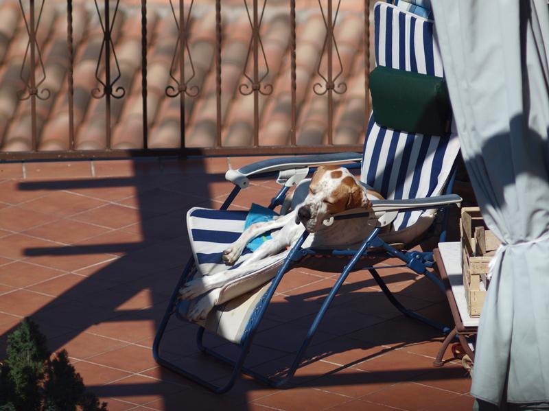 Quelle vie de chien Olympu10