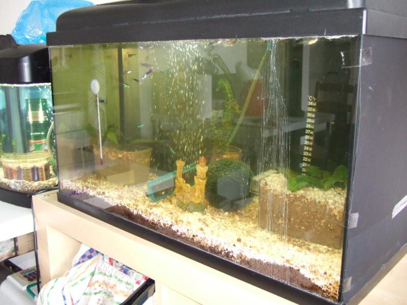 Mes aquariums, leur histoire et leur évolution... 60L et 25L Aqua6010
