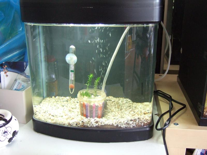 Mes aquariums, leur histoire et leur évolution... 60L et 25L Dscf1210