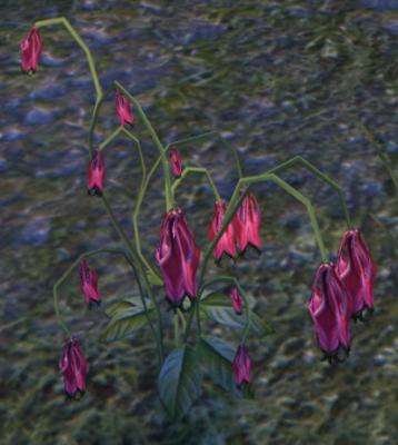 Herbier : la Flore du Couchant Ancoli11