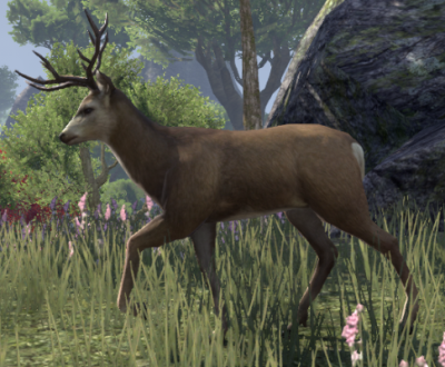 cerf12.png