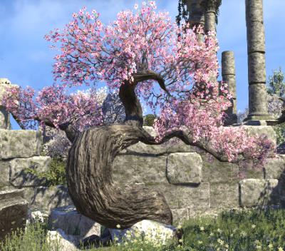 Herbier : la Flore du Couchant Cerisi13