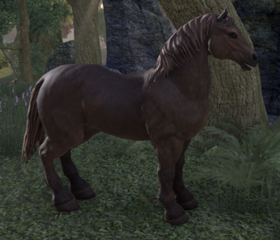cheval10.png