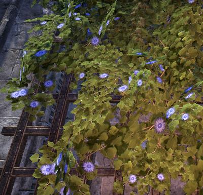 Herbier : la Flore du Couchant Clzoma10