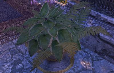 Herbier : la Flore du Couchant Fougzo10