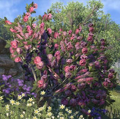 Herbier : la Flore du Couchant Horten10