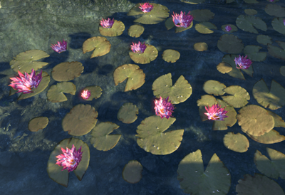 Herbier : la Flore du Couchant Lotus_10