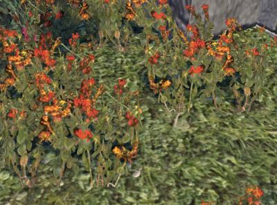 Herbier : la Flore du Couchant Luzern10
