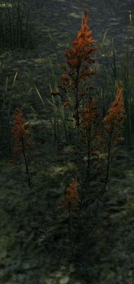 Herbier : la Flore du Couchant Lys_de10