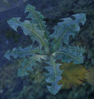 Herbier : la Flore du Couchant Nirnra10