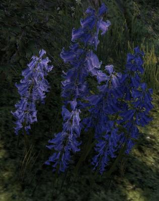 Herbier : la Flore du Couchant Noctue10