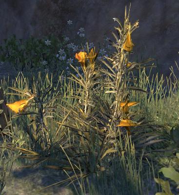 Herbier : la Flore du Couchant Olzoan10