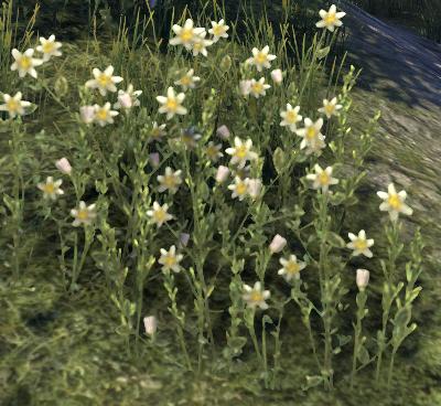 Herbier : la Flore du Couchant Parnas10