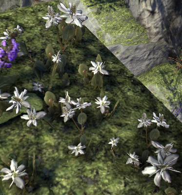 Herbier : la Flore du Couchant Queue-10