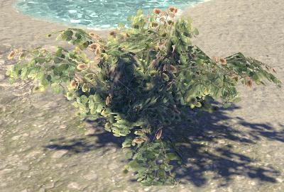 Herbier : la Flore du Couchant Raisin10