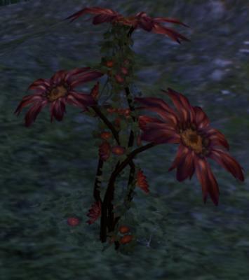 Herbier : la Flore du Couchant Rose-d10