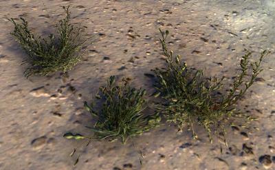 Herbier : la Flore du Couchant Salico10