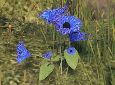 Herbier : la Flore du Couchant Screen43