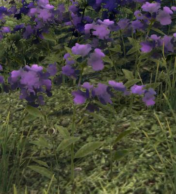 Herbier : la Flore du Couchant Screen47