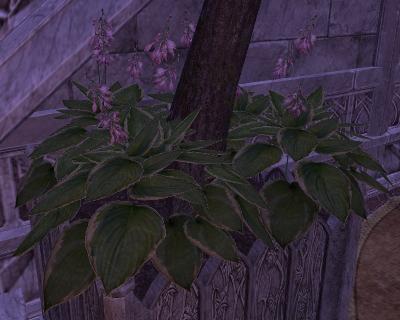 Herbier : la Flore du Couchant Screen48
