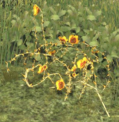 Herbier : la Flore du Couchant Screen50