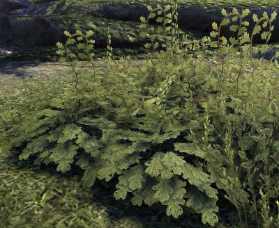 Herbier : la Flore du Couchant Screen51