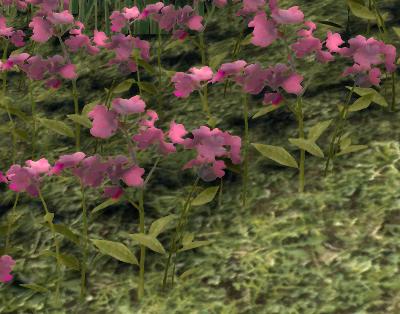Herbier : la Flore du Couchant Screen53