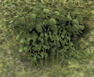 Herbier : la Flore du Couchant Screen54