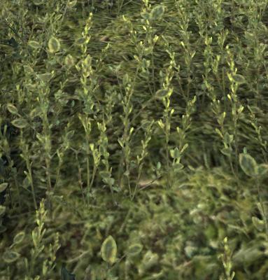 Herbier : la Flore du Couchant Screen55