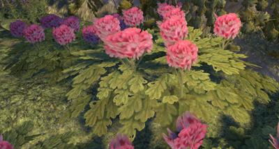 Herbier : la Flore du Couchant Screen56