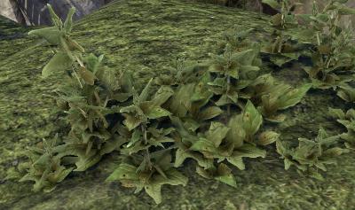 Herbier : la Flore du Couchant Screen57