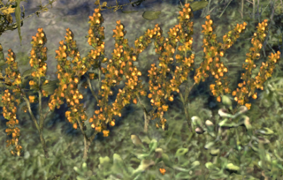 Herbier : la Flore du Couchant Screen60