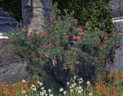 Herbier : la Flore du Couchant Screen61