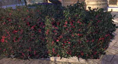 Herbier : la Flore du Couchant Screen62