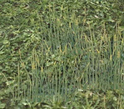 Herbier : la Flore du Couchant Screen71