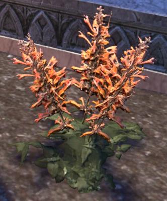 Herbier : la Flore du Couchant Screen72