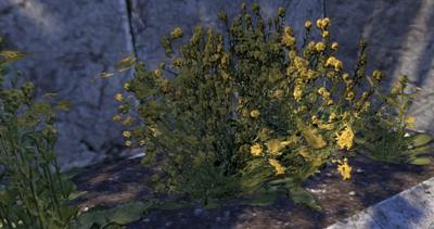 Herbier : la Flore du Couchant Screen73