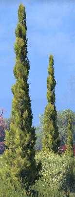 Herbier : la Flore du Couchant Screen74