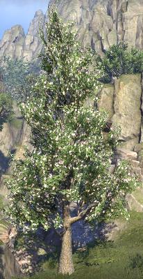 Herbier : la Flore du Couchant Screen77