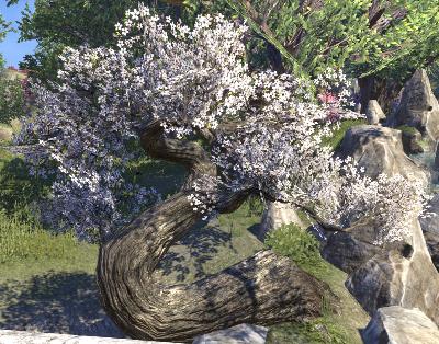 Herbier : la Flore du Couchant Screen78