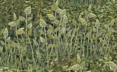 Herbier : la Flore du Couchant Screen80