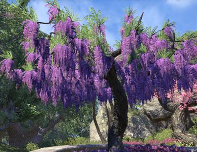 Herbier : la Flore du Couchant Screen85