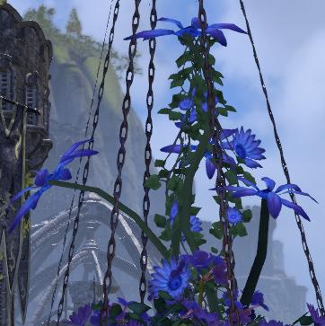 Herbier : la Flore du Couchant Screen94