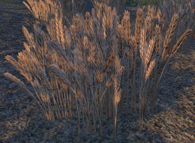 Herbier : la Flore du Couchant Seigle10