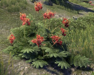 Herbier : la Flore du Couchant Solois10