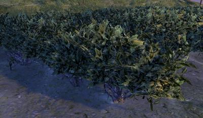 Herbier : la Flore du Couchant Thzo10