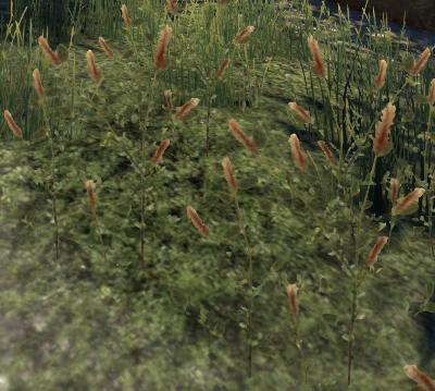 Herbier : la Flore du Couchant Trzofl10
