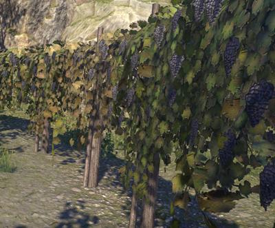 Herbier : la Flore du Couchant Vigne10